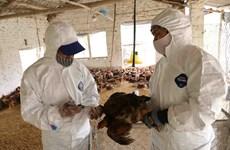 组图:海阳省主动采取禽流感防控措施