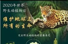 图表新闻:2020年世界野生动植物日:维护地球上所有的生命