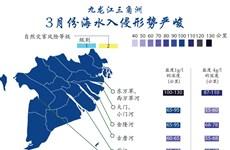 图表新闻:九龙江三角洲:3月份海水入侵形势严峻