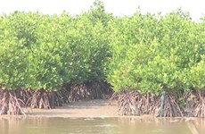 广南省居民积极植树造林防治水土流失