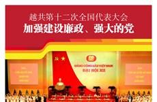 图表新闻:越共第十二次全国代表大会:加强建设廉政、强大的党