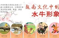 图表新闻:越南文化中的水牛形象