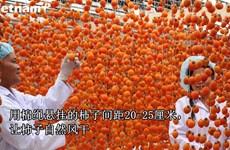 靠日本技术振兴大叻吊柿饼产业