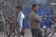 木州野桃花汇聚花卉集市  赢得消费者的青睐