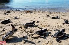 组图:昆岛——全球最神秘且最具魅力的岛屿