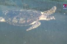 宁顺省主山生物圈保护区努力保护珍稀海龟