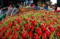 今年前10个月越南向国际挑剔市场出口一万吨新鲜水果