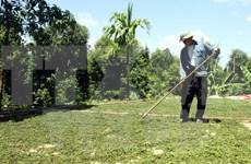 越南胡椒世界第一