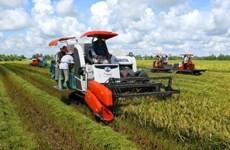 越南芹苴市与韩国开展大米加工出口合作项目