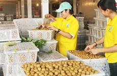 2016年河内市农业迎难而上  农业总产值同比增长2.2%