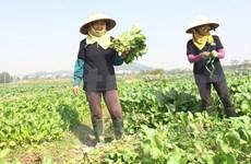 有机农业,启发性问题