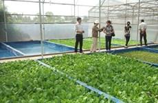 茶荣省多措并举推进高科技农业发展