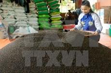 2017年1月全国胡椒出口量同比大幅下降
