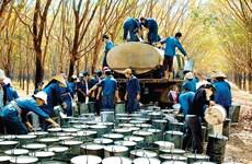 越南嘉莱省批准61个招商引资项目
