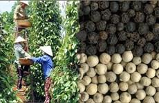 越南胡椒产量预计增长15%以上