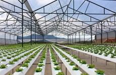 越南嘉莱省投资建设5个高科技农业园区