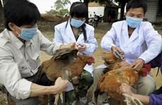 河内市公布两条预防禽流感热线电话