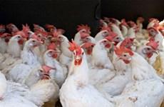 越南暂停进口美国家禽及其产品