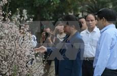 越南国会主席阮氏金银参观日本樱花展