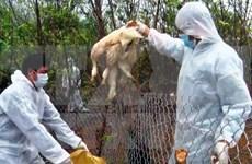 越南卫生部就禽流感防控情况举行记者会