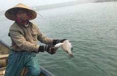 越南中部四省遭受环境事故一年后 :人民的生活正逐渐恢复正常