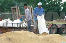 2017年前四月泰国大米出口量达340万吨