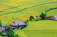越南是全球第6大水稻种植国家