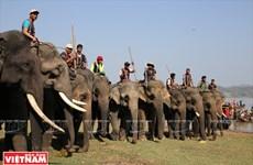 西原野象驯养业与赛象节(组图)
