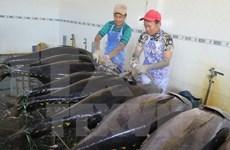 2030年越南海鱼出口额有望达80亿美元