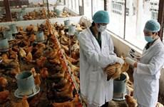 甲型H7N9禽流感病毒发生变异