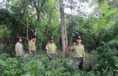 越南力争实现到2030年全国森林覆盖率达45%的目标