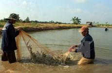 越南金瓯省力争2020年前虾类出口总额达20亿美元