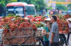 2017年越南北江荔枝销售促进会在中国举行