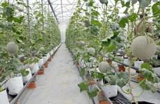 农产品是同奈省内资企业的主要出口商品