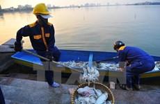 河内市将环保工作视为迫切任务