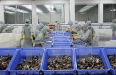 越南虾类寻找新的出口市场