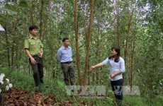 2017年全国林产品出口金额预计达逾75亿美元
