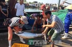 承天顺化省水产品捕捞和加工产量增加