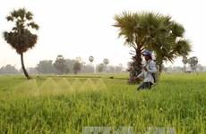 越南努力实现可持续农业转型