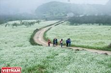 木州高原上的体验游