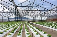 海防市集中发展高科技农业区