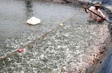 越南前江省海洋捕捞产量猛增