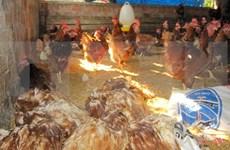 2018年越南将研制禽流感甲型H5N1疫苗