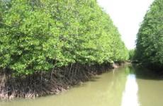 """共同管理红树林有助于恢复沿海绿色""""屏障"""""""