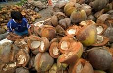 今年前8月印尼椰子出口创汇9亿美元