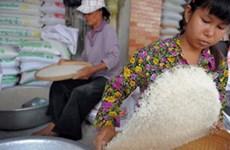 柬埔寨大米出口量继续增加