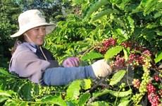 今年前9月越南对阿尔及利亚出口额增长17%