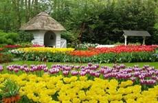 2017年第七届大叻花卉节将于12月底在林同省举行