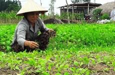 清化省下拨90万美元 协助农民恢复灾后生产