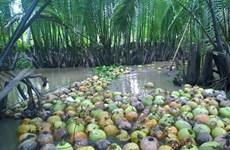 越南椰子之故事